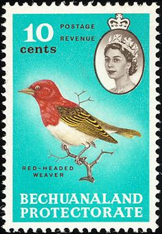 Red-headed Weaver stamps - mainly images - gallery format