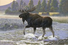 Morning Crossing - moose painting by Al Agnew Wildlife Paintings, Wildlife Art, Bull Moose, Moose Art, Mule Deer, Forest Animals, Beautiful Paintings, Painting & Drawing, Photo Art