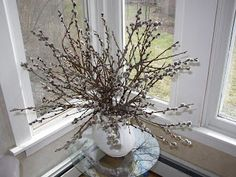Recently I overheard a patron mention his willow tree had budded, a sure sign of Spring Willow Leaf, Willow Branches, Willow Tree, Dyngus Day, Happy Images, Green Curtains, Lonely Heart, Spring Sign, Cozy Mysteries