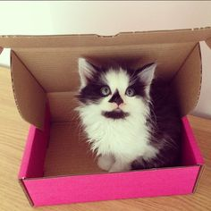 Around the World in Birchbox Instagrams: Kittens, Madewell Shopping Sprees, and More