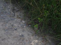 Ano, a toto je had! Nezkoumala jsem jaký, fotka je rozmazaná, protože jsem zároveň tím foťákem mávala a křičela jsem naň ho... :-))