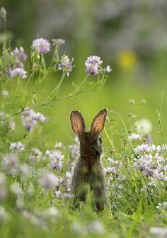 Love the highlighted ears cute little hare