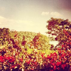 Coffee estate Arusha https://www.facebook.com/pages/Coffee-Society/651773478236556