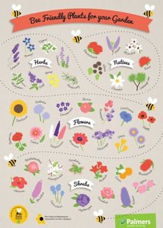 Bee Friendly Plants Poster - the path of the bee draws the eye down the page . - Bee Friendly Plants Poster – the path of the bee draws the eye down the page and the bright ve - Herb Garden, Garden Plants, Flowers Garden, Honey Bee Garden, Bee Friendly Plants, Bee Friendly Flowers, Gazebos, Potager Bio, Month Flowers