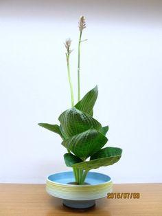 池坊・花のあけちゃんブログ 花の力は素晴らしい。550年の歴史ある「池坊いけばな」をお稽古してます。創作力で脳の力アップ