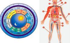 """Medic: """"Boala fizică este strigătul de ajutor al sufletului"""" Chinese Body Clock, Late Night Dinner, Lymphatic System, Traditional Chinese Medicine, Energy Level, Reflexology, Our Body, Metabolism, Told You So"""