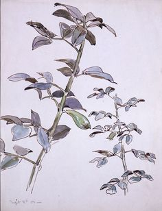 Beatrix Potter, Unidentified sprays of leaves with a seed pod, 2 September 1903. © Frederick Warne & Co.