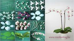 "Képtalálat a következőre: ""Phalaenopsis (lepkeorchidea)"" Orchid Leaves, Moth Orchid, Sugar Paste Flowers, Biscuit, Miniature Plants, Polymer Clay Flowers, Cake Decorating Tutorials, Minis, Clay Tutorials"