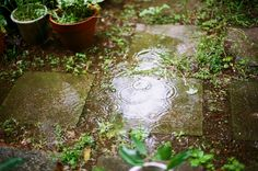 rainy garden - Smell of the bowels of the earth, careful lapping of the rain, a drop running down the bridge of th - What A Nice Day, Le Vent Se Leve, The Garden Of Words, Spring Aesthetic, Fae Aesthetic, Natsume Yuujinchou, Plantation, Rainy Days, Spring Time