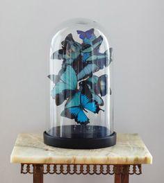 Borboletas de papel em redoma de vidro