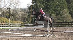 Auckland video production horse riding lesson Masterclass