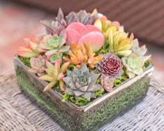Succulent Arrangement In Turquoise Square Container/bowl Large. Succulents  GardenSucculent PlantsSucculent Wall ...
