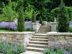 lovely terraced hill side, stone wall, purple, junipers
