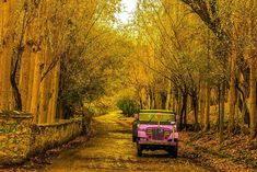 Hopper Valley - Nagar Valley - Gilgit Baltistan - Hills & Valley | Croozi