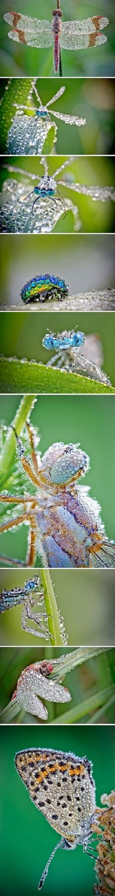 Dew dusted insects....
