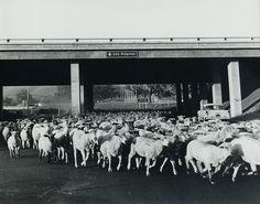 Moorpark Road passing under 101 Freeway, 1965