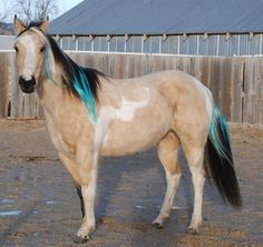 """Colorful Manes and Tails clip in extensions for horses. Every horse needs a little """"wild child"""" I think."""