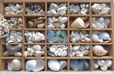 Seashells in a vintage printer tray. | campinglivezcampinglivez