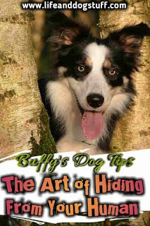 The Art of Hiding From Your Human Buffys Dog Tips Life and Dog Stuff dog humor dog lovers dog mom dog memes funny dogs Funny Baby Memes, Funny Dogs, Funny Humor, Buffy, Cute Baby Animals, Funny Animals, Cute Puppies, Dogs And Puppies, Funny Sports Pictures