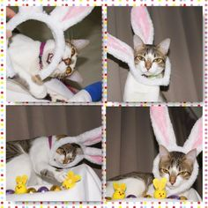 Our Miss Poppett's Easter photo shoot  www.exclusive-tabby.com.au  Embedded image permalink