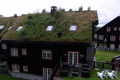 For hundreds of years houses in Norway have been covered with turf. And they come in different varieties. Some are bright green and almost velvety. Others are golden and look like they're growing wheat or oats. A number of turf roofs have flowers mixed in with the grass, and a few have small trees.  The advantages of turf roofs (also called sod roofs) are many. They are very heavy, so they help to stabilize the house; they provide good insulation; and they are long-lasting.