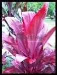 Miss my tropical Garden