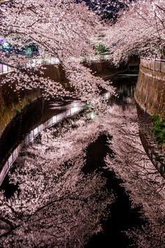 桜色、カレイドスコープの画像(写真) Cherry trees at Meguro river, Tokyo, Japan 中目黒の桜