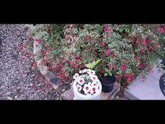 Evening Walk in the front garden 20 March 2021 Summer Evening, Late Summer, The Creator, March, Join, Garden, Plants, Garten, Lawn And Garden