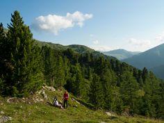 """Unterwegs in der Heimat der Zirbe.  egeben Sie sich in das Herz des Biosphärenparks Nockberge und lassen Sie sich von einem Guide die Besonderheiten der """"Königin"""", der Zirbe, näher bringen. Der würzige, holzige Geruch wird Sie in der Nase kitzeln, während Sie Duftsäckchen basteln und das Panorama genießen. Carinthia, Joy Of Living, Mountains, Nature, Alps, Naturaleza, Nature Illustration, Off Grid, Bergen"""