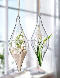 Glashänger mit runder Öffnung - so bekommen die Pflanzen gut Luft und die Deko Hänger lassen sich leicht nach Belieben befüllen! #diy #glashänger #deko #home #weltbild