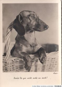 """The German on this vintage dachshund postcard roughly translates to """"Do you think no more of me?"""" Of course I do, sweet dachshund. Of course I do."""
