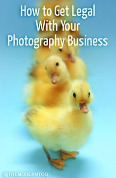 Is your Photography Business still not legal? Learn what you need to do to officially start a photography business. Click now to check it out!