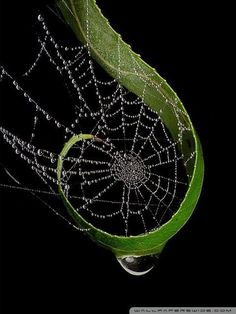 Great location for a spider web.the spider agreed. Spider Art, Spider Webs, Foto Nature, In Natura, Fotografia Macro, Water Droplets, Macro Photography, Levitation Photography, Winter Photography