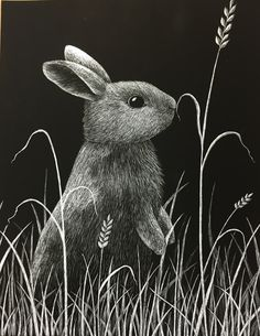 Rabbit Spot! - Blog
