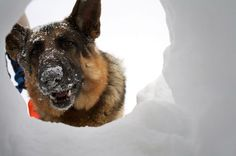 Save the people from the snow, avalanche rescue dog training landscape