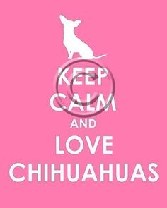 How appropriate that my first 'pin' be something 'chihuahua'!
