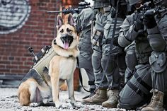 K9 Police Officer and the SWAT team.