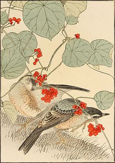 Imao Keinen  Japanese Stephanandra, Red-tailed Thrush