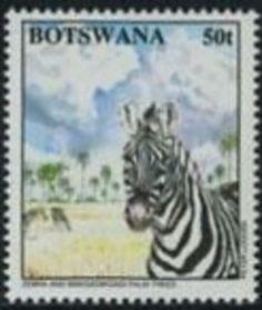 Zebra (Equus sp.), Makgadikgadi Trees