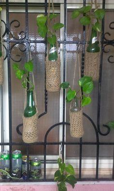 Indoor Plants Home Decor