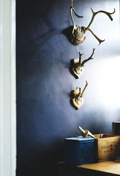 antlers, love the color of the wall.