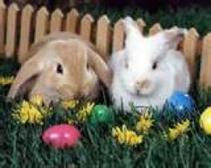 Rabbits as Easter Gifts