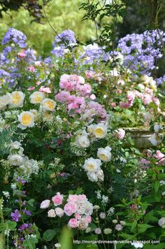 Rose Garden Cottage Garden Roses - time to dream of Summer loveliness - Love Flowers, Beautiful Flowers, Summer Flowers, Pastel Roses, English Country Gardens, French Country, Garden Cottage, Rose Cottage, Cottage Style