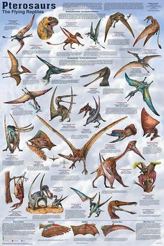Pterosaurs were the first vertebrates known to have been able to fly. Description from feenixx.com. I searched for this on bing.com/images