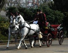I would so love to journey somewhere in a horse drawn landau. Mostly would love it be in a lovely grand place, like a palace or grand house location, Something historic.or through a grand long driveway to a house. I would so love this! <3