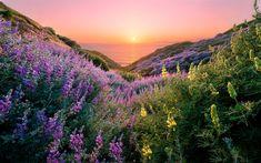 Herunterladen hintergrundbild schöner sonnenuntergang, küste, gras, himmel, sonne, hügel, meer, skyline, san francisco, usa