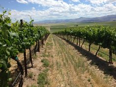 Sawtooth Vineyard in Nampa, ID