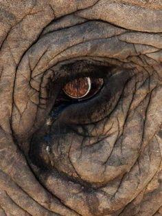 "Eugene TullekenAddo Elephant National Park - The home of the ""BIG - Animals Pictures Photo Elephant, Image Elephant, Elephant Eye, African Elephant, African Animals, Elephant Baby, Animals And Pets, Baby Animals, Cute Animals"