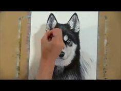 Drawing a Siberian husky - time lapse art #husky #drawing #timelapse #dogportrait #petportrait #animalart #art #dogs #timelapse