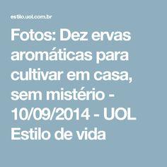 Fotos: Dez ervas aromáticas para cultivar em casa, sem mistério - 10/09/2014 - UOL Estilo de vida